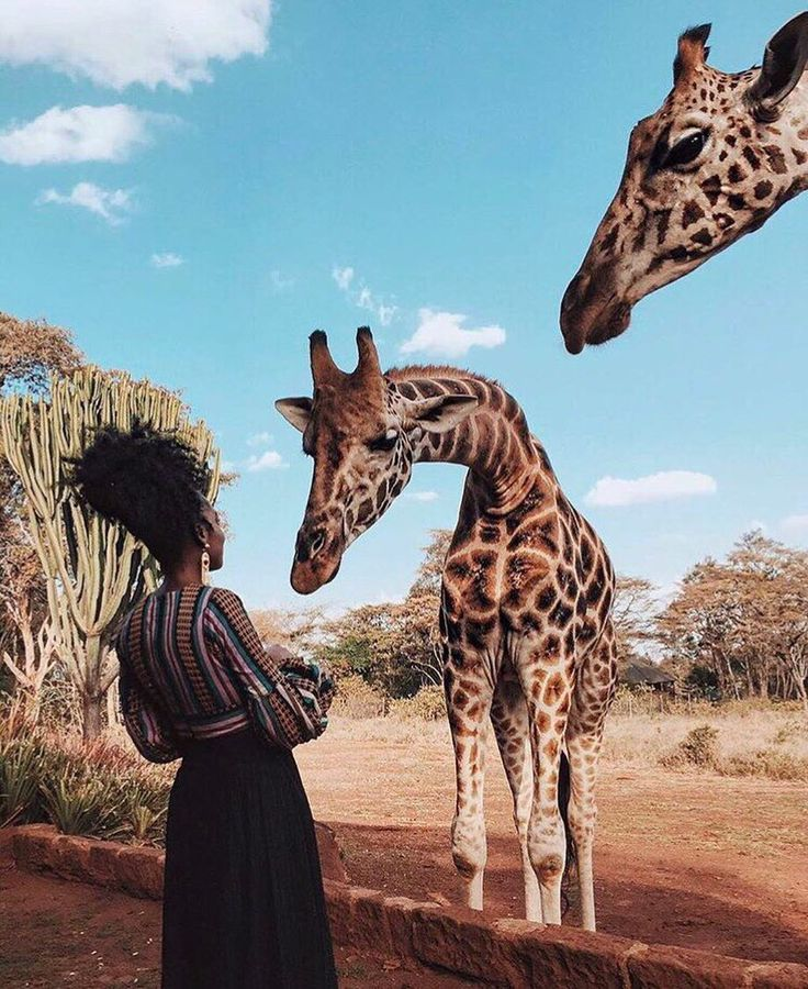 Find Out where To Go On Safari Now